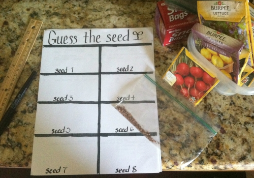 Seeds and paper for guess the seed game