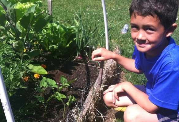 Boy with young plants in garden
