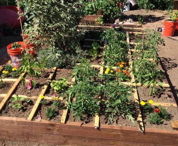 Large square foot garden