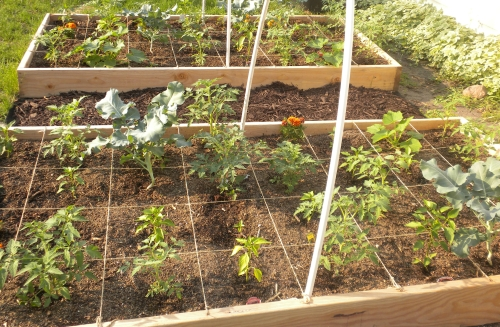 square food garden (SFG)