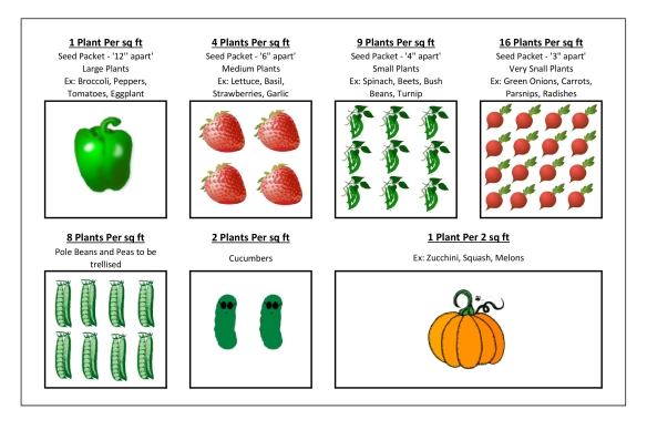 How many seeds/plants per square