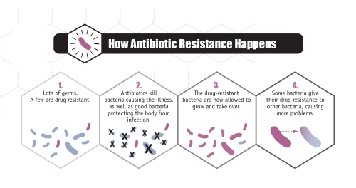 Graphic of how antibiotic resistance happens