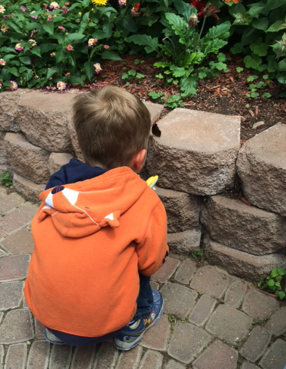 Rear view of a little boy looking at a butterfly