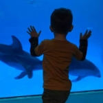 boy watching two dolphins