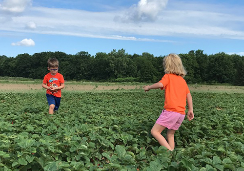 two kids in strawberry patch
