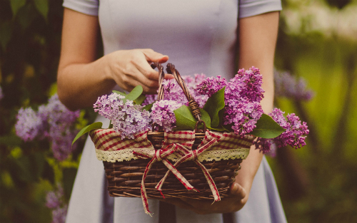 woman holding basket of lilacs